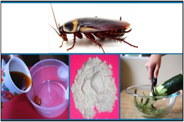 How-to-Get-Rid-Of-Roaches