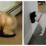 Si votre animal de compagnie fait ça, appelez immédiatement votre vétérinaire