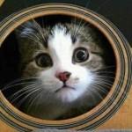 13 exemples hilarants de chats qui se cachent dans des endroits bizarres