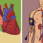 6 aliments qui aideront à faire baisser votre tension artérielle