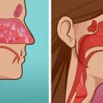Voici le meilleur remède naturel pour soulager une sinusite