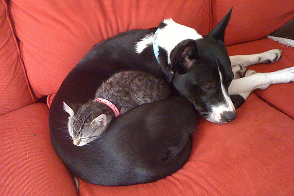 cats_sleeping_on_dogs_10