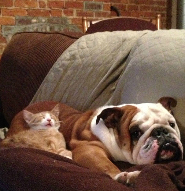 cats_sleeping_on_dogs_17