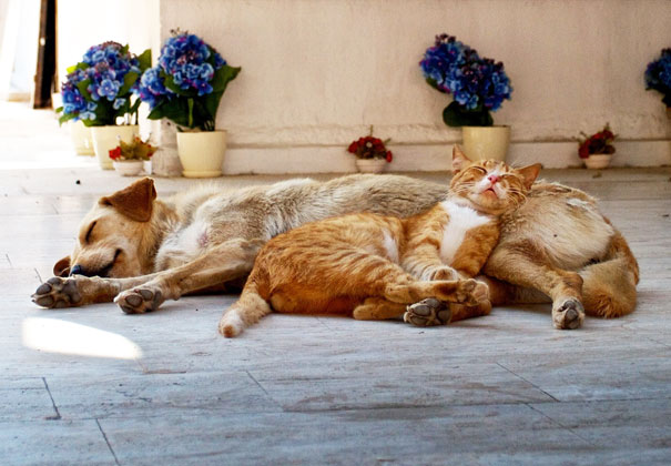 cats_sleeping_on_dogs_18