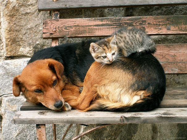 cats_sleeping_on_dogs_20