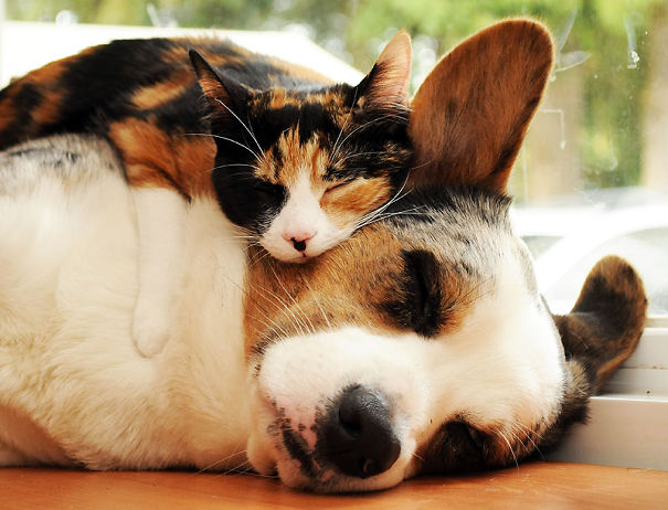 cats_sleeping_on_dogs_22