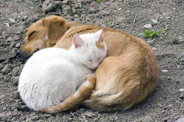 cats_sleeping_on_dogs_23