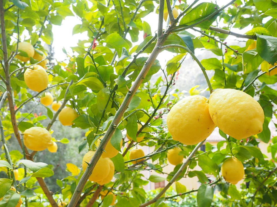 lemon-1117565_960_720