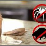 Tout ce dont vous avez besoin c'est d'un sachet de thé et vous ne verrez jamais de souris ou d'araignées dans votre maison!