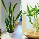7 plantes qui apportent de l'énergie positive à votre maison