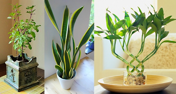 7-plants-attract-positive-energy-home-office