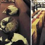 Au lieu de les chasser, ce café ouvre ses portes aux chiens errants chaque nuit