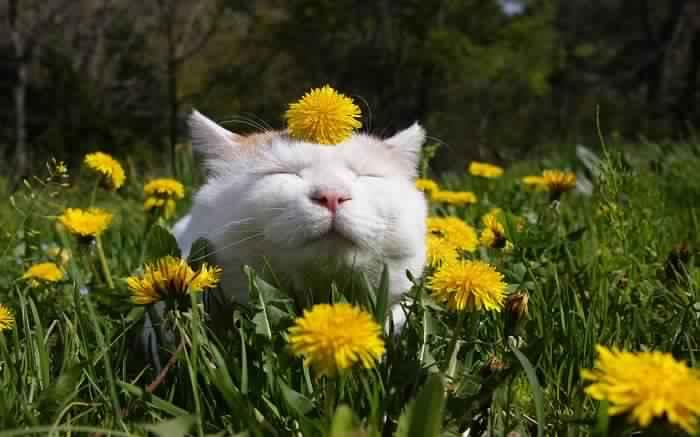 cat-in-the-garden