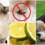 Voici les meilleurs remèdes naturels contre les tiques et les puces