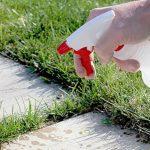 Pulvérisez ce mélange et vous ne verrez plus jamais de mauvaises herbes dans votre jardin
