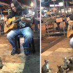 4 petits chatons viennent écouter le chanteur de rue que tout le monde ignore