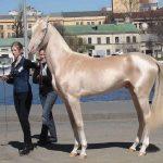 21 chevaux les plus beaux et les plus rares au monde
