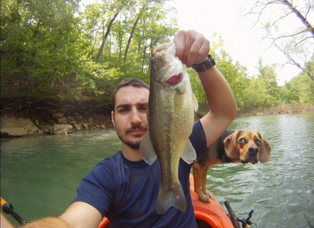 dog-fish-photobomb