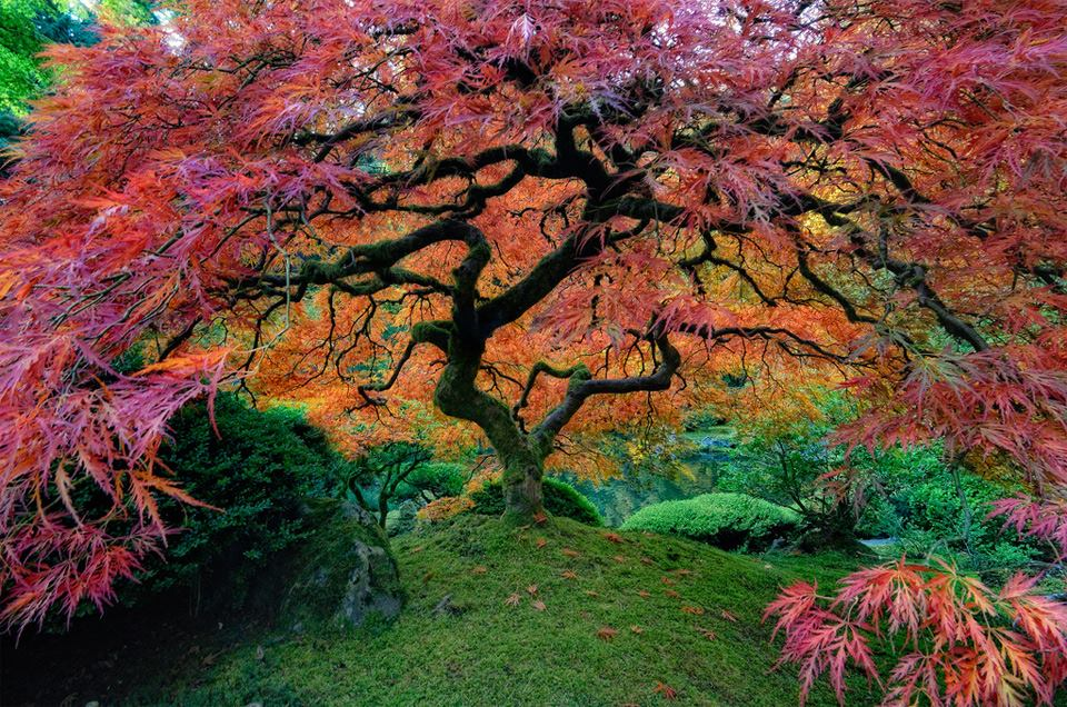 worlds_most_beautiful_trees_2