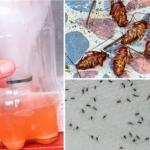 Cette préparation naturelle va vous faire oublier les moustiques et les cafards dans votre maison