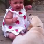 La réaction de ce chiot face au bébé est la chose la plus heureuse que vous n'ayez jamais vue