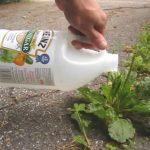 Ce jardinier vous présente 9 astuces naturelles pour éliminer toutes les mauvaises herbes