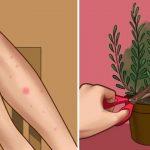 Ce que vous devez savoir sur les moustiques et comment les garder loin cet été