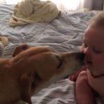 Ce bébé à eu le droit à un bisou de son chien. Sa réaction est tellement mignonne!