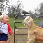 La conversation entre ce bébé et cette chèvre est à mourir de rire!