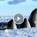 Cette vidéo de 2 minutes est la meilleure chose que j'ai vue sur la nature. Vous pourrez la regarder en boucle!