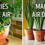 10 plantes qui créent un microclimat parfait à la maison