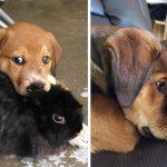 15 images avant et après d'animaux qui grandissent ensemble