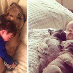 18 photos adorables qui prouvent que les chiens sont des «compagnons de câlins» parfaits