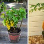 Économisez de l'argent sur les fruits. Ce jardinier vous montre 7 fruits que vous pouvez cultiver à la maison