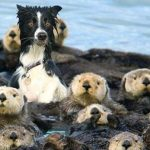 14 animaux hilarants qui sont complètement confus quant à savoir à quelles espèces ils appartiennent