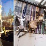 10 chats qui aiment le soleil plus que n'importe quoi