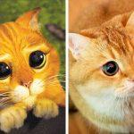 14 animaux qui ressemblent aux personnages de Disney