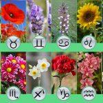 Les meilleures fleurs à planter selon votre signe du zodiaque