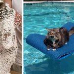 30 chats qui ont immédiatement regretté leurs mauvais choix