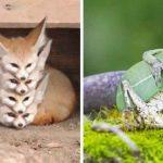 17 photos étonnantes d'animaux pris exactement au bon moment