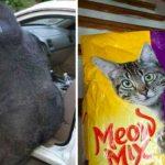 20 photos hilarantes d'animaux pris au bon moment