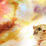 Qui est votre animal spirituel, selon votre signe du zodiaque
