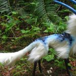 Voici 15 animaux uniques que vous aurez du mal à croire qu'ils sont réels