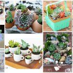 11 idées pour des pots de plantes grasses à faire avec des choses que vous avez à la maison