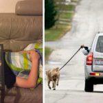 16 photos hilarantes que les personnes paresseuses trouveront brillantes