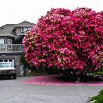 16 des plus magnifiques arbres du monde
