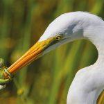 Voici les meilleures photos d'oiseaux de 2017