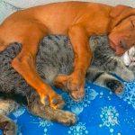 8 chats et chiens qui prouvent que vous n'avez pas besoin d'être la même espèce pour être les meilleurs amis