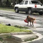 Des images puissantes de l'ouragan Harvey qui montrent le pouvoir dévastateur de la nature