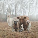 20 photos qui prouvent que les animaux peuvent faire une jolie pose